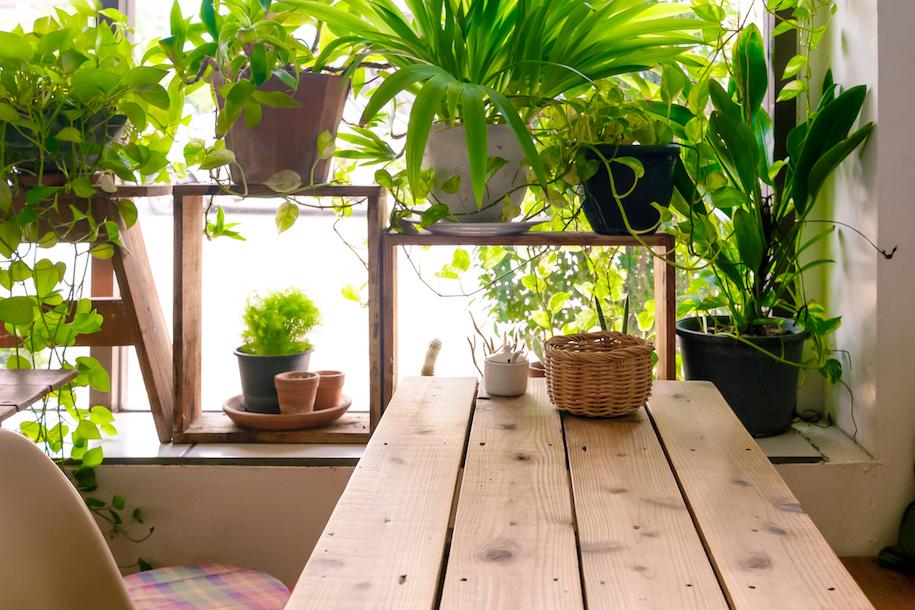 bring nature indoors